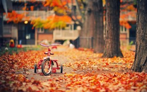 autumn-leaves-falling-down-like-pieces-into-place